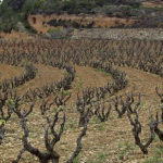 DO-Penedes-Castell-dOr-Cellers-de-lArboç-1