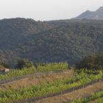 DO-Conca-de-Barbera-Vega-Aixala-Vilanova-de-Prades-6