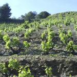 Tast-de-vins-DO-Priorat-Celler-Castellet-Porrera-enoguia-01