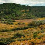 DO-Tarragona-Cooperativa-de-Salomo-Salomo-3