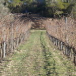 DO-Tarragona-Vins-Ecologics-Helga-Harbig-Rasquera-1