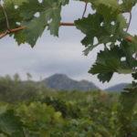 DO Tarragona-Vins-Ecologics-Helga-Harbig-Rasquera-3