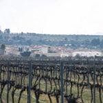 DO-Tarragona-Vins-i-Olis-Suner-Ginestar-2