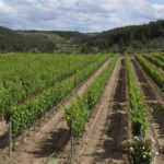 Cata-de-vinos-y-maridaje-Terra-Alta-Bernavi-Vilalba-dels-Arcs-1