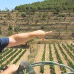 Cata-de-vinos-y-maridaje-Terra-Alta-Bernavi-Vilalba-dels-Arcs-5