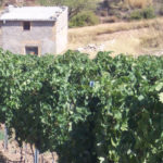 DO-Terra-Alta-Celler-Jordi-Miro-Corbera-dEbre-3