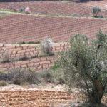 DO-Terra-Alta-Celler-Xavier-Clua-Vilalba-dels-Arcs-3