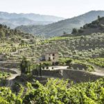 DO-Costers-del-Priorat-Bellmunt-enoguia-03