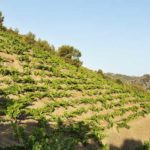 DO-Costers-del-Priorat-Bellmunt-enoguia-09