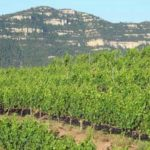 DO-Montsant-Celler-Serra-Major-Ulldemolins-Enoguia-01