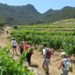 DO-Montsant-Vinyes-Domenech-Capcanes-enoguia-04