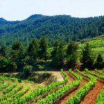 DO-Montsant-Vinyes-Domenech-Capcanes-enoguia-05