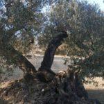 DO-Tarragona-Celler-Helga-Harbig-Rasquera-07