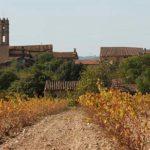 DO-Tarragona-Celler-Mas-Bella-Masmolets-07