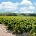 DO-Tarragona-Vins-Padro-Brafim-03
