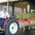 DO-Tarragona-agricola-de-brafim-enoguia-01