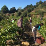 Visita-bodega-DO-Tarragona-celler-mas-del-boto-alforja-21