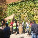Visita-bodega-DO-Tarragona-celler-mas-del-boto-alforja-30