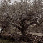 DO-Tarragona-vins-i-olis-suner-ginestar-05