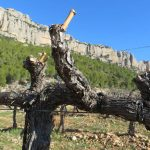 Enoguia-scaladei-do-priorat-enoturismo-01