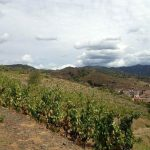 DO-Priorat-Alvarez-Duran-Porrera-01