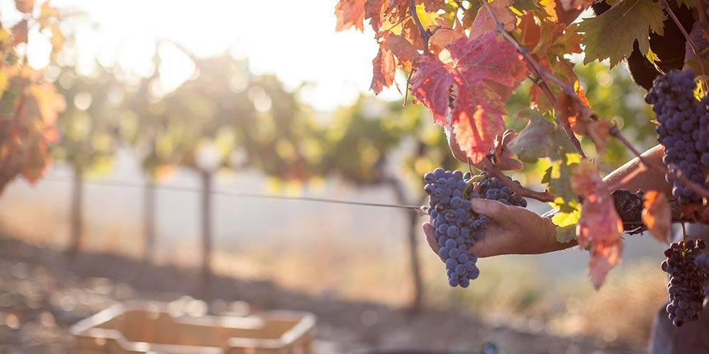 Tasting wines Priorat Gratallops • Meritxell Pallejà • DOQ Priorat