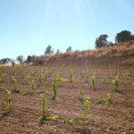 DO-Tarragona-Celler-sanroma-vilarodona-01