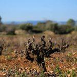 DO-Tarragona-Cellers-Blanch-bodega-puigpelat-04