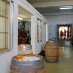 DO-Tarragona-Cellers-Blanch-bodega-puigpelat-05