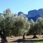 Identitat-olive-oil-horta-sant-joan-enoguia-01